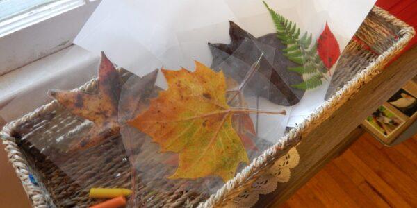 leaf rubbing Fall activity set up