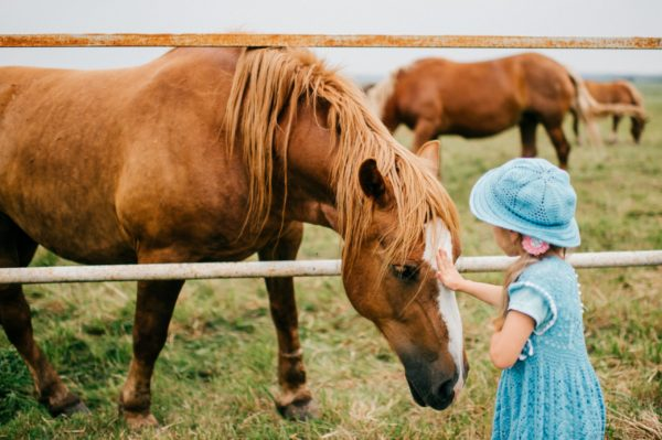 child petting a horse. an easy way how to Montessori homeschool
