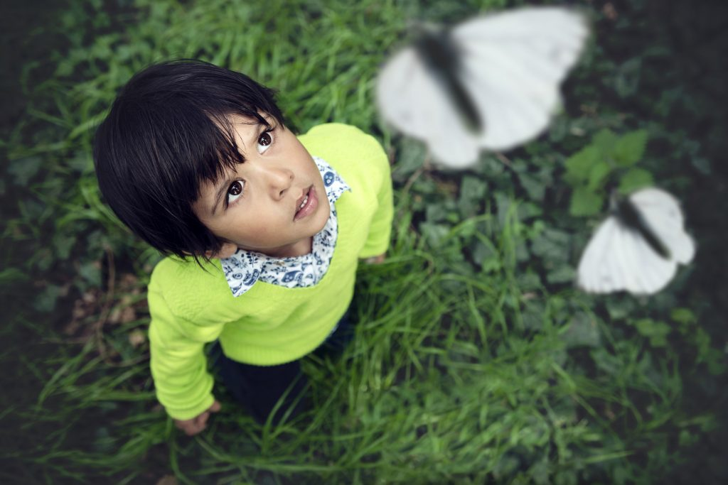 Young child looking at butterflies