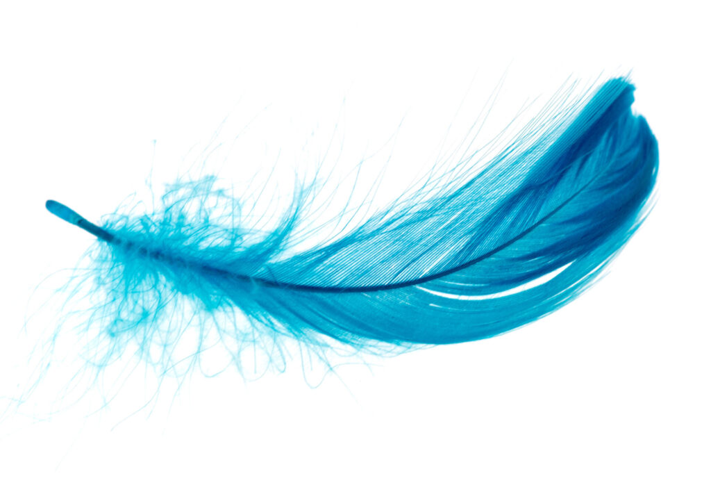 image of feather, representing Montessori circle time idea of feather race.
