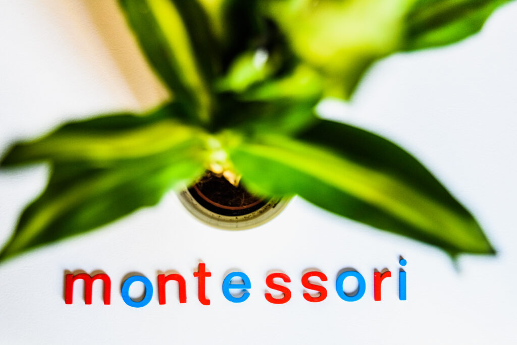 image of plant with the word montessori underneath it for the montessori age groups article.